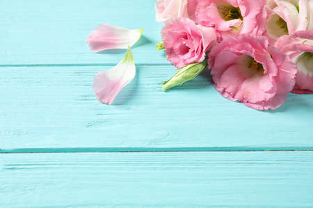 Beautiful Eustoma flowers on light blue wooden table, space for text
