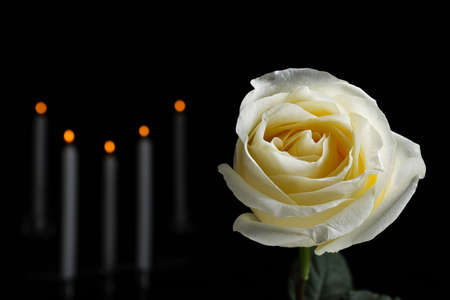 White rose and blurred burning candles in darkness, closeup with space for text. Funeral symbol Stock Photo