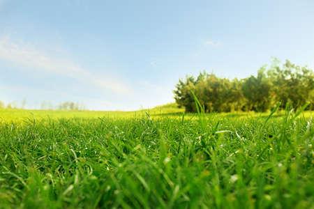 Malowniczy krajobraz z pięknym zielonym trawnikiem w słoneczny dzień