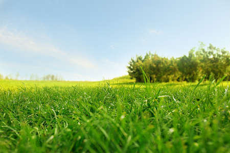 Picturesque landscape with beautiful green lawn on sunny day
