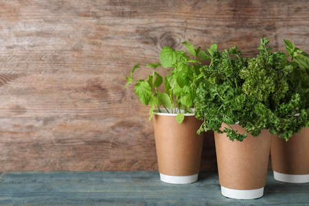 Seedlings of different aromatic herbs in paper cups on blue table near wooden wall. Space for text