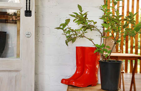 Rubber boots and potted plant on wooden crate near house, space for text. Gardening tools Stockfoto