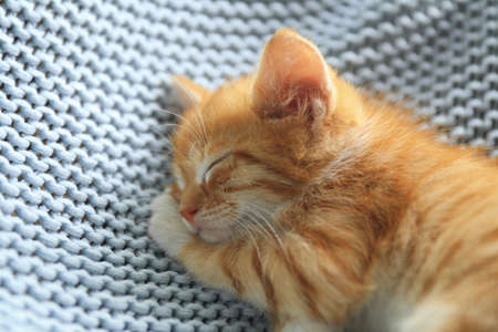 Sleeping cute little red kitten on light blue blanket, closeup view 写真素材