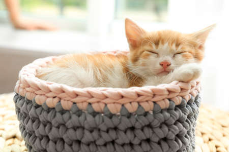 Cute little red kitten sleeping in knitted basket at home 写真素材
