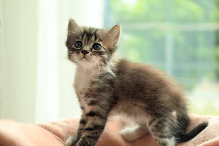 Cute little striped kitten on soft blanket at home