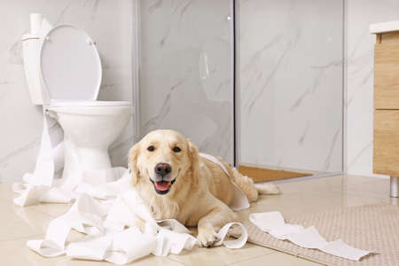 Mignon Golden Labrador Retriever jouant avec du papier toilette dans la salle de bain