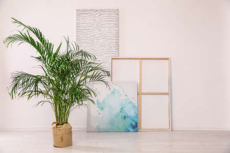 Indoor palm tree and paintings for interior design on floor in room. Trendy plants for home