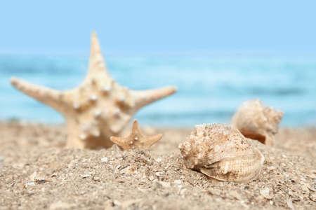 Beautiful starfish and shells on sand near sea. Beach objects