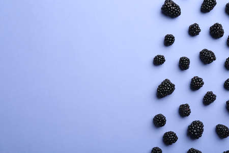 Fresh ripe blackberries on lilac background, flat lay. Space for text 스톡 콘텐츠