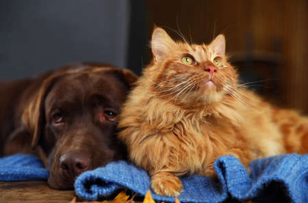 Cute cat and dog on wooden table at home. Warm and cozy winter Фото со стока