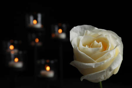 White rose and blurred burning candles in darkness, closeup with space for text. Funeral symbol