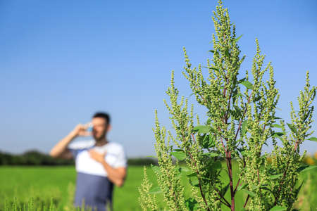 Blooming ragweed plant (Ambrosia genus) and blurred man on background, closeup. Seasonal allergy Banco de Imagens