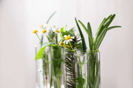 Test tubes of different essential oils with plants against light background, closeup