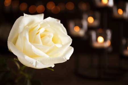 White rose and blurred burning candles on background, space for text. Funeral symbol