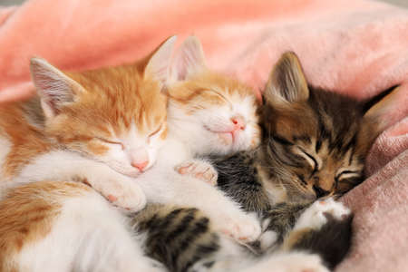Cute sleeping little kittens on pink blanket