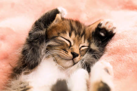Cute sleeping little kitten on pink blanket, above view Фото со стока