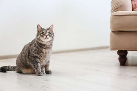 Cute gray tabby cat sitting on floor indoors, space for text. Lovely pet Фото со стока