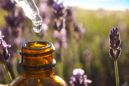 Dropper with lavender essential oil over bottle in field, closeup. Space for text