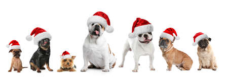 Set of adorable dogs in Santa hats on white background Banco de Imagens