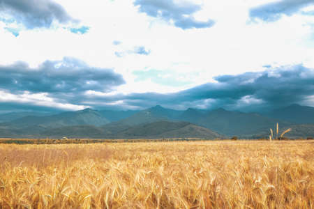 Picturesque view of wheat field and cloudy sky Stock fotó