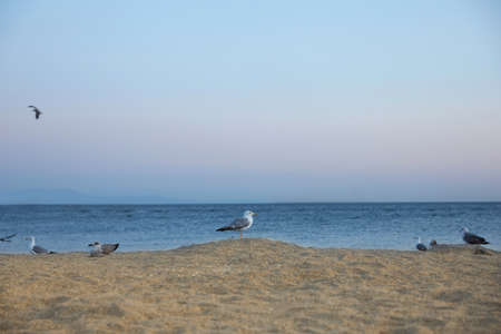 Picturesque view of beautiful beach with seagulls in evening 스톡 콘텐츠