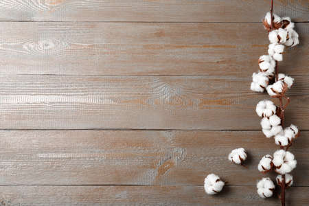 Flat lay composition with cotton flowers on wooden background. Space for text