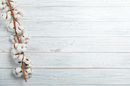 Branch of cotton plant on white wooden background, top view. Space for text