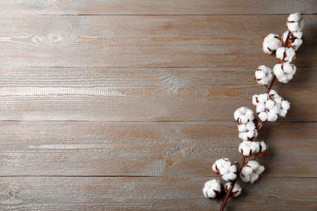 Branch of cotton plant on wooden background, top view. Space for text