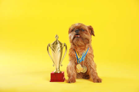 Cute Brussels Griffon dog with champion trophy and medals on yellow background