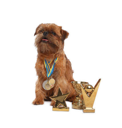 Cute Brussels Griffon dog with champion trophies and medals on white background