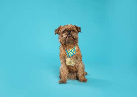 Leuke Brusselse Griffon-hond met kampioensmedailles op lichtblauwe achtergrond Stockfoto