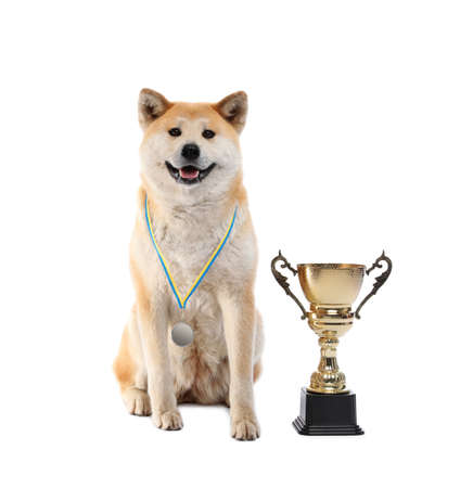 Adorable Akita Inu dog with champion trophy and medal on white background Banco de Imagens