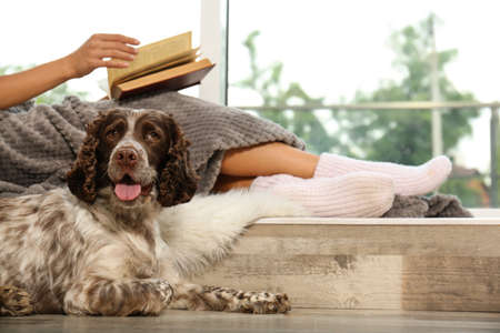 Adorable Russian Spaniel with owner on windowsill, closeup view. Space for text