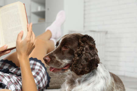 Adorable Russian Spaniel with owner indoors, closeup view Banco de Imagens