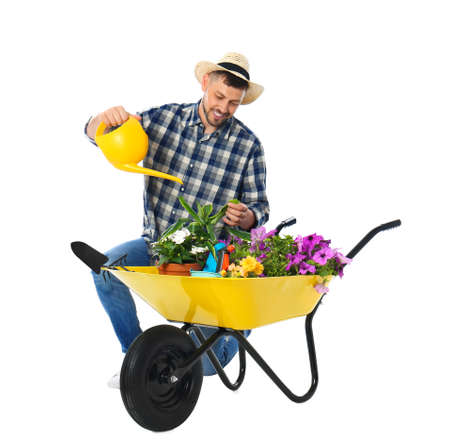 Male gardener watering plants in wheelbarrow on white background