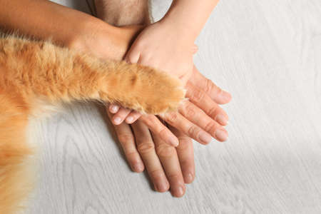 Closeup of family and cat holding hands together on light wooden floor, top view. Space for text