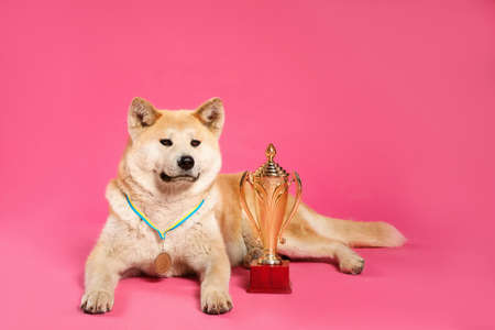 Adorable Akita Inu dog with champion trophy and medal on pink background. Space for text