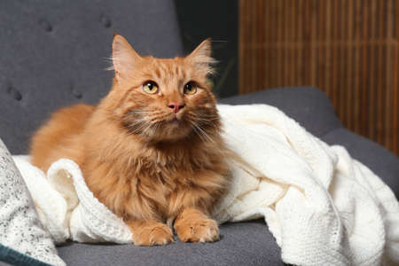 Cute red cat on dark grey sofa at home, closeup view. Space for text