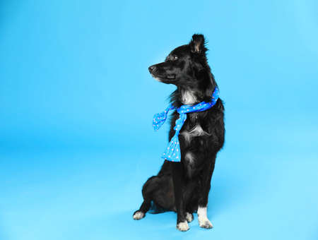 Cute dog with scarf on blue background. Space for text Фото со стока