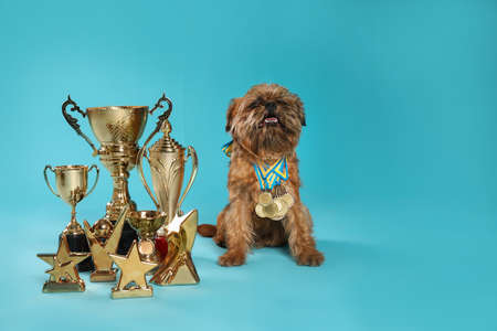 Cute Brussels Griffon dog with champion trophies and medals on light blue background. Space for text