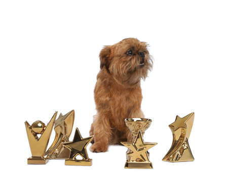 Cute Brussels Griffon dog with champion trophies on white background Stockfoto