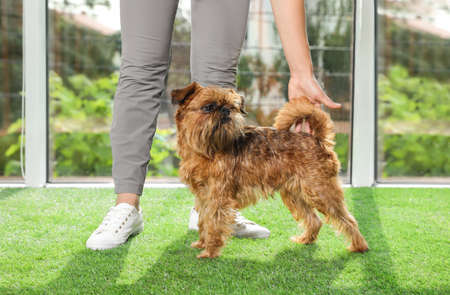 Young woman and cute Brussels Griffon dog indoors. Champion training