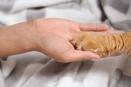 Woman and cat holding hands together on warm blanket, closeup view