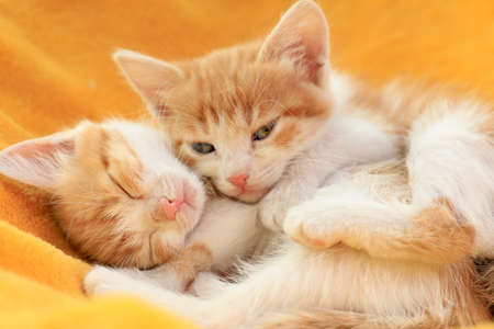 Cute little red kittens on yellow blanket, closeup view