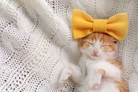 Cute little kitten with bow sleeping on white knitted blanket, top view. Space for text
