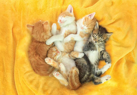 Cute little kittens on yellow soft blanket, above view