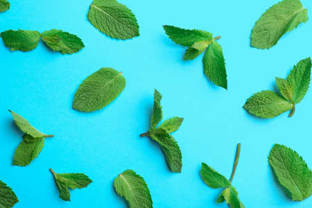 Fresh mint leaves on light blue background, flat lay Stockfoto