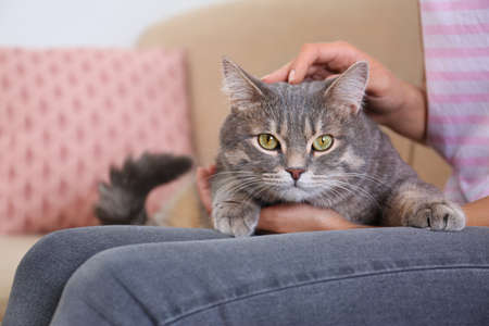 Young woman and cute gray tabby cat on couch indoors, closeup. Lovely pet
