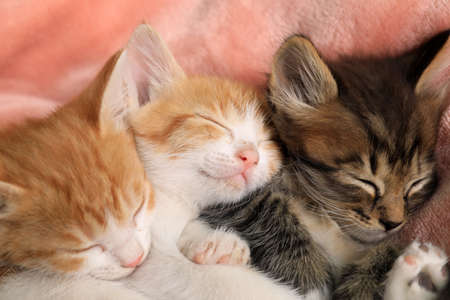 Cute little kittens on pink blanket, closeup view Stock Photo
