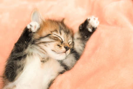 Cute little kitten sleeping on pink blanket, space for text